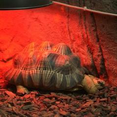 Żarówka dla żółwia